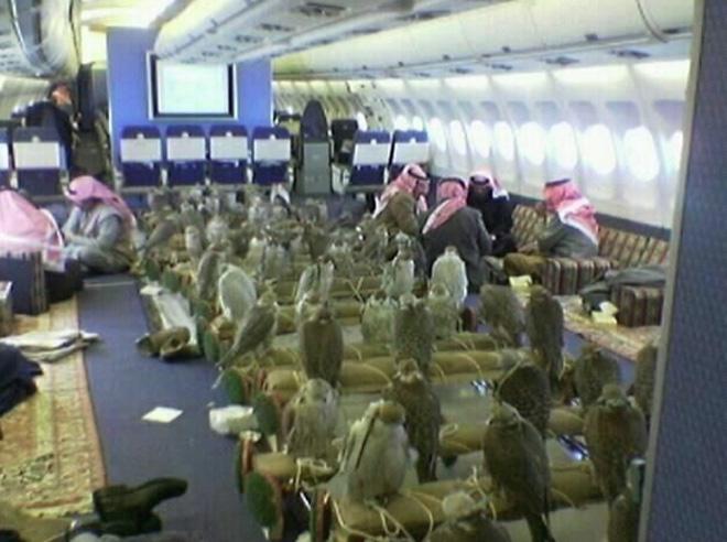 Саудовский принц купил 80 билетов насамолёт для собственных соколов