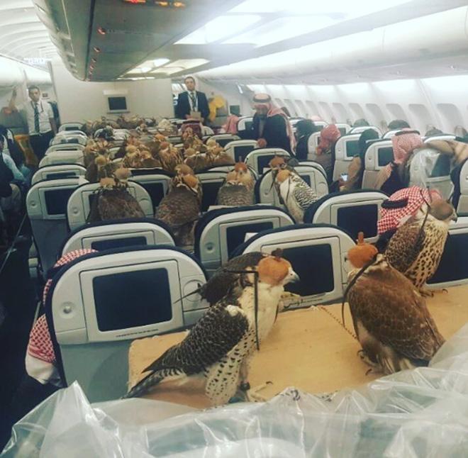 Саудовский принц купил билеты насамолет для 80 ястребов